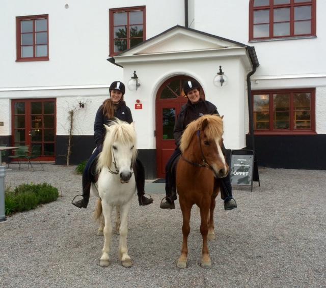 Islandshäst framför Anstalt, Wengarn