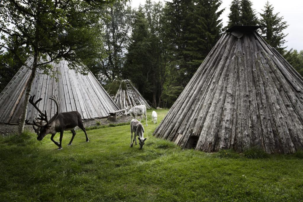 Camp same