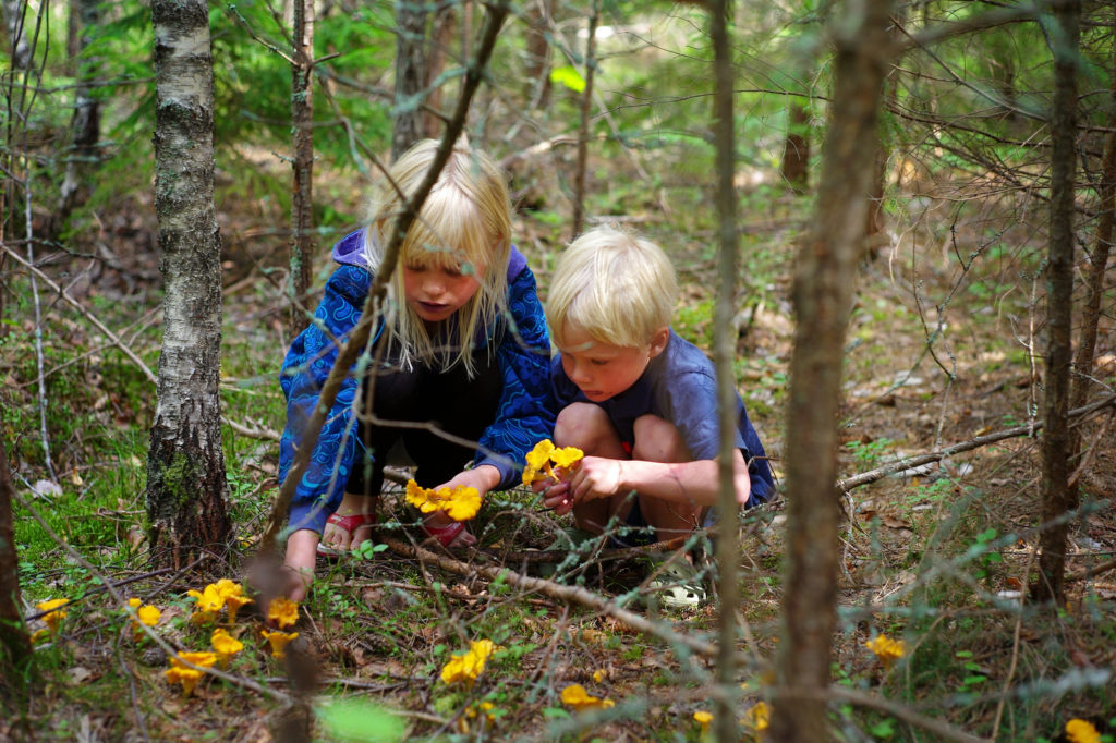 Enfants cueillant des champignons