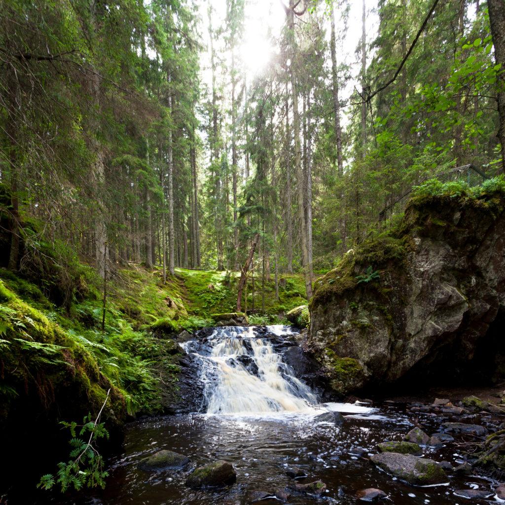Torrent dans la forêt