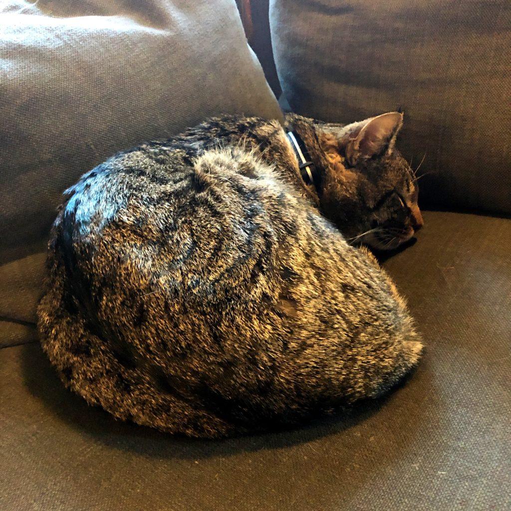 Frasse, roulé en boule sur un canapé