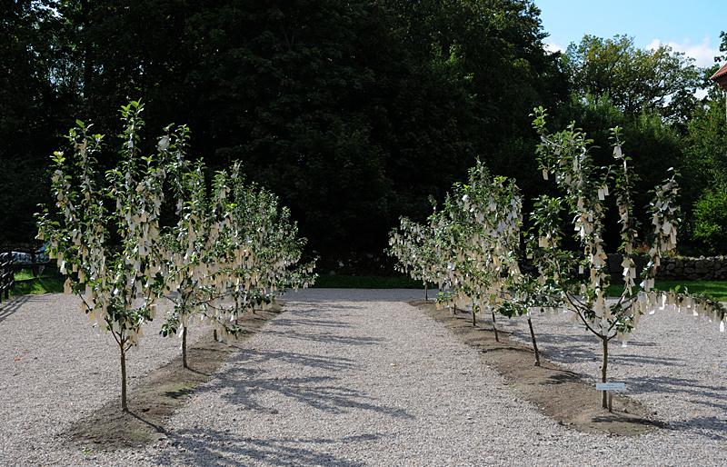 Wish Tree de Yoko Ono