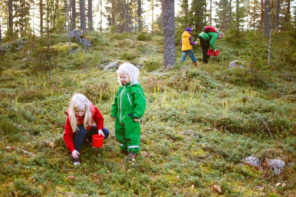 Ceuillette de baies dans la forêt
