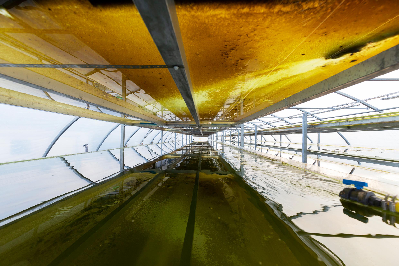 Fabrique d'algues à Göteborg