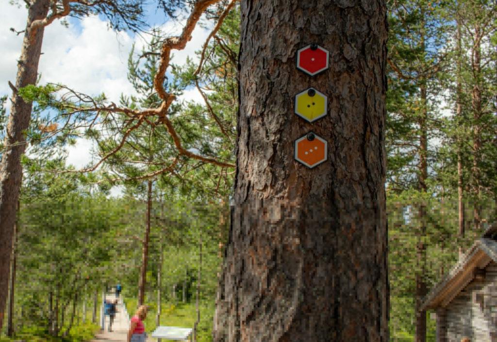 Fulufjällets trails